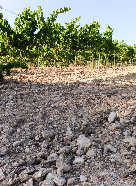 viñas y terroir en bodega Castellroig_